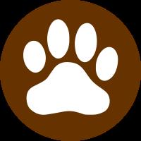 Animais exóticos